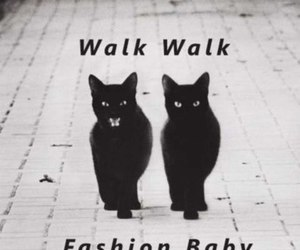 cat, fashion, and baby image