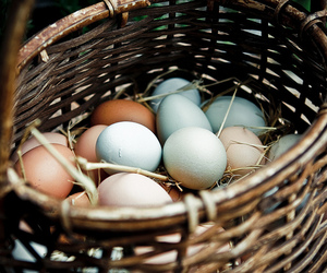 eggs and basket image