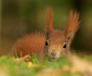 squirrel image