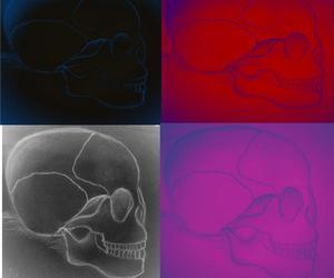 beautifull, drawing, and skulls image