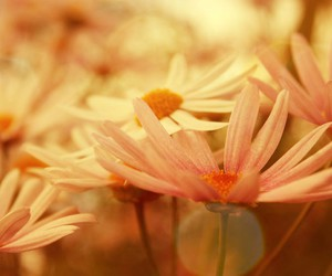 flower, peaceful, and pink image