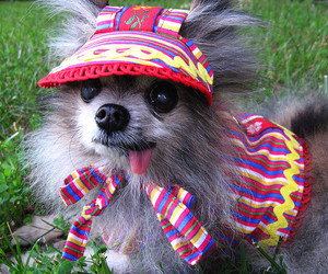 funny, cute, and POM image