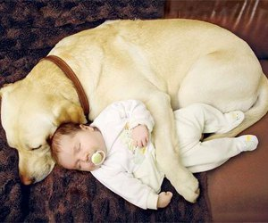 animals, bebes, and babies image