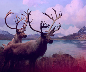 animals, nature, and clouds image
