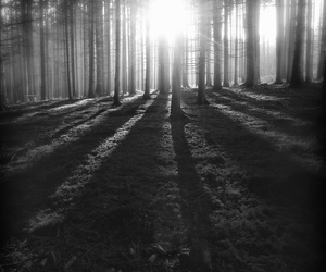 sun, trees, and black and white image