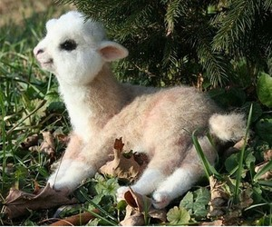cute, alpaca, and animal image