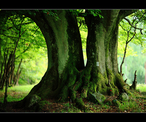 tree and vyer image