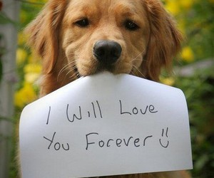 dog, love, and forever image