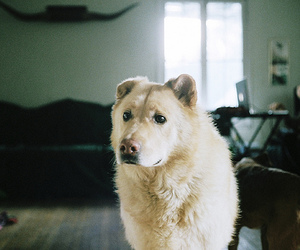 dog, vintage, and film image