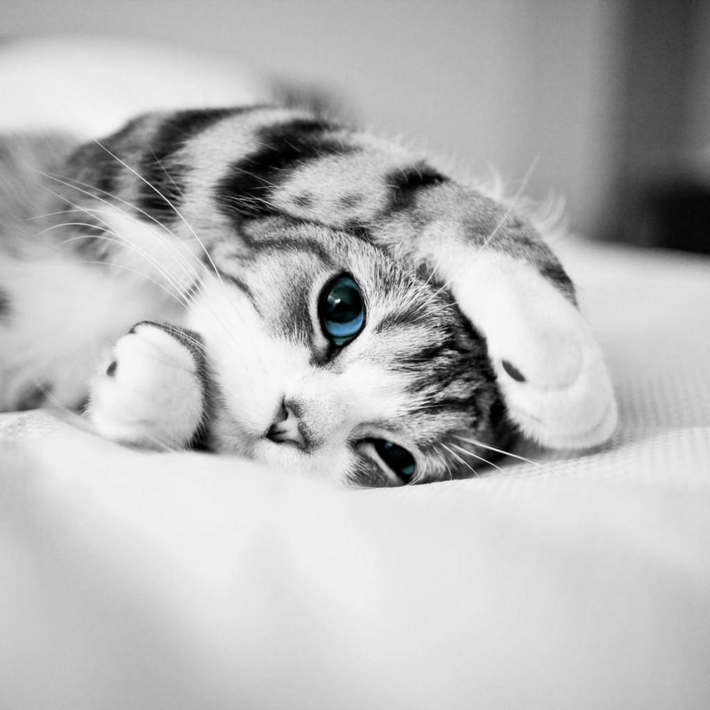 Kitten Wallpaper For Ipad En Img365 Com On We Heart It