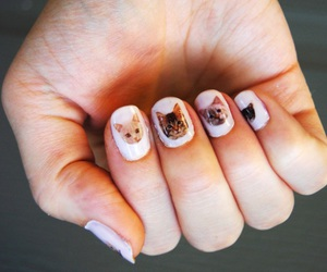 nails, cat, and white image