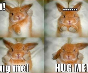 cute, hug, and bunny image