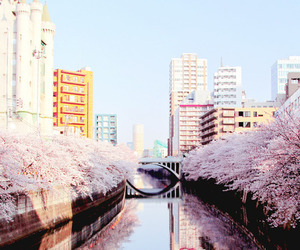 buildings, cherry blossom, and cherry tree image