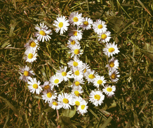 flowers, peace, and daisy image