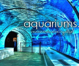 Aquariums, beautiful, and text image