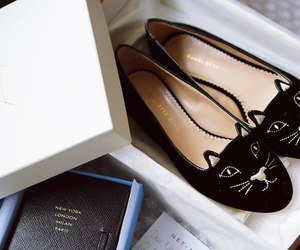 shoes, fashion, and cat image