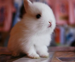 bunny, fluffy, and cute image