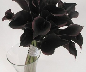 black, flowers, and cala lilies image