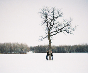 snow, tree, and winter image