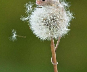 dandelion and mouse image
