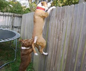 dogs and funny. lol image