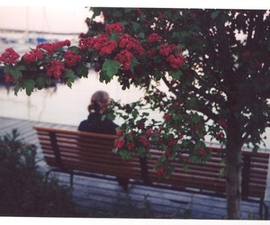 flowers, alone, and vintage image