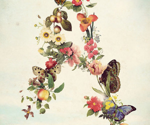 butterfly, flowers, and illustration image