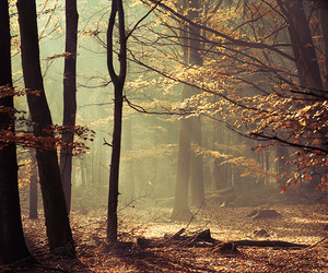 forest, fall, and tree image