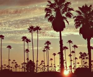 nice, palms, and sunset image
