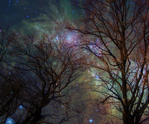 tree, stars, and galaxy image