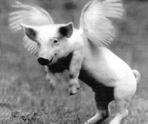 pig, wings, and animal image