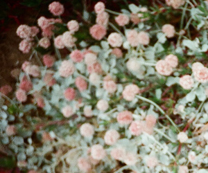 flowers, california, and LC-A+ image