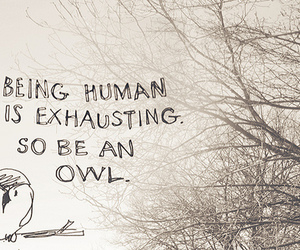 nature, text, and owl image