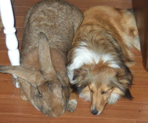 rabbit, dog, and cute image