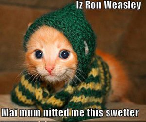 harry potter, kitten, and cute image