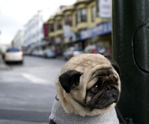 dog, lonely, and mops image