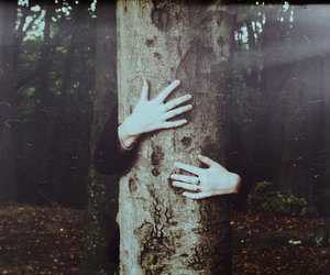 tree, forest, and hands image