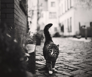 b&w, cat, and lovely image