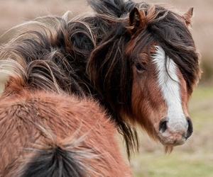 bay, fuzzy, and horse image