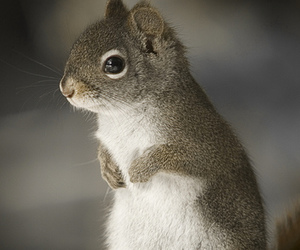 squirrel, djur, and cute image