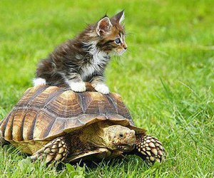cute, turtle, and cat image