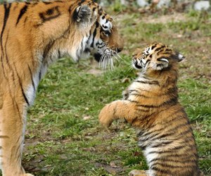 animal, photography, and cubs image
