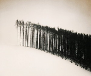 b&w, trees, and picture image