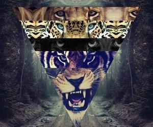 tiger, lion, and animal image