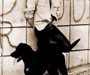 Jim Morrison, dog, and the doors image