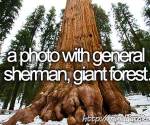 before i die, california, and dreams image