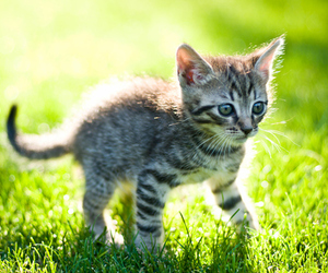 kitten, cat, and photography image