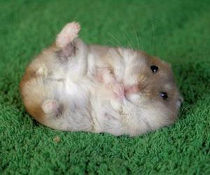 hamster and cute image