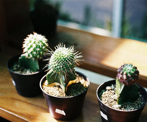 cactus, plant, and green image