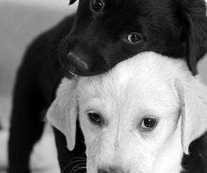adorable, adore, and black and white image